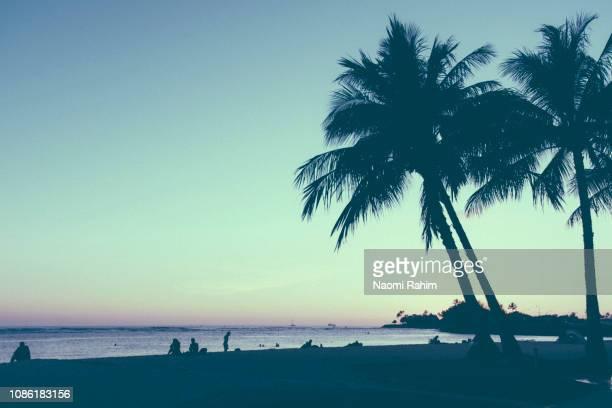 silhouetted palm trees along waikiki beach, hawaii - árbol tropical fotografías e imágenes de stock