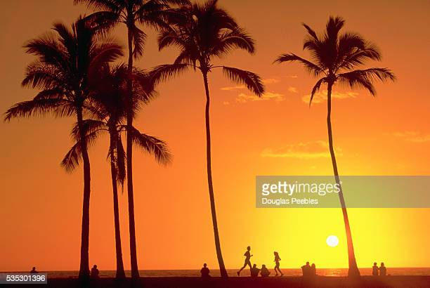 Silhouetted Palm Trees and Dramatic Orange Sky at Sunset