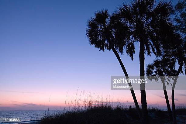 silhouetted palm trees at sunset - sarasota stock photos and pictures