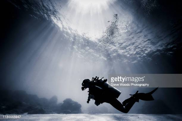 silhouetted scuba diver swimming near coral reef, lombok, indonesia - underwater diving ストックフォトと画像