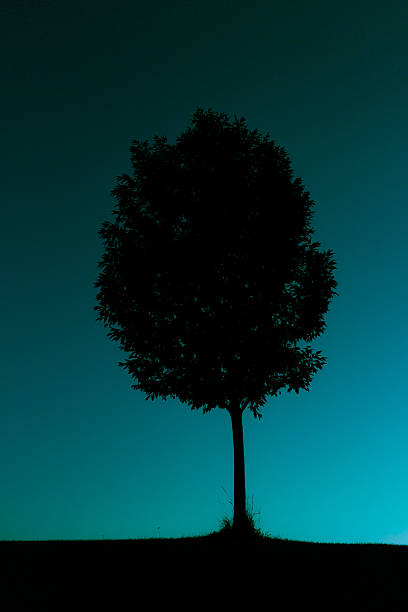 Silhouetted tree against cyan sky