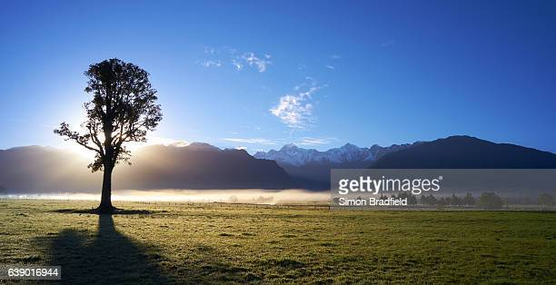 Silhouetted Tree And The Southern Alps
