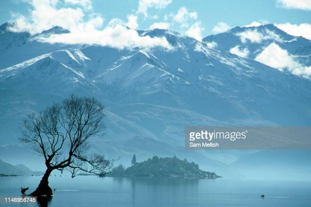 A silhouetted tree at Lake Wanaka with Mount Aspiring National Park in the distance on the 1st June 2003 in Wanaka in New Zealand Mount Aspiring...