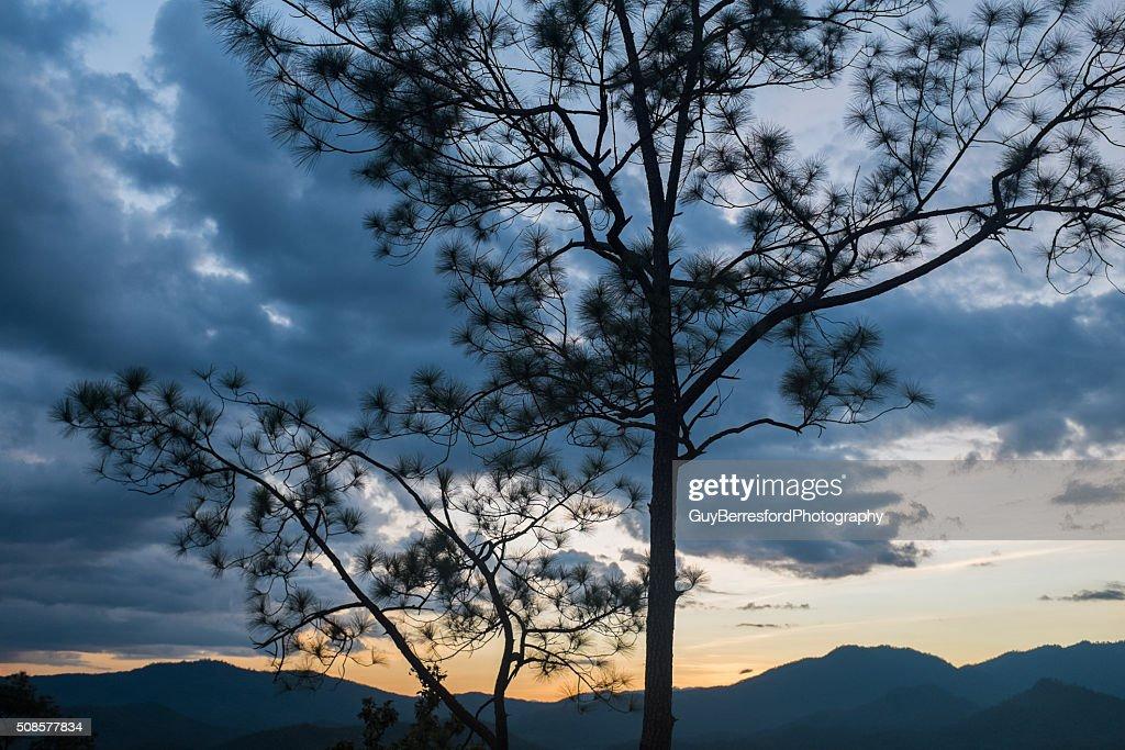 Silhouettes d'arbres : Photo