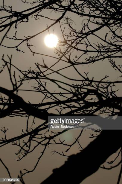 Silhouetted tree, winter dark sun.