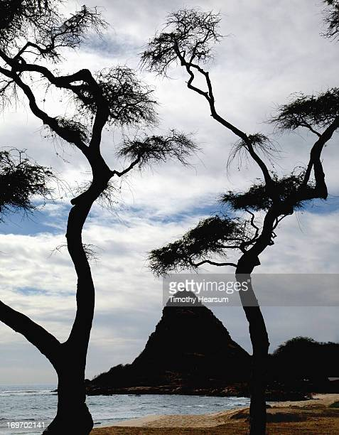 silhouetted trees and rock formation at beach - timothy hearsum stockfoto's en -beelden