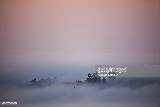 Silhouetted trees emerging from low cloud, Langhe, Piedmont. Italy