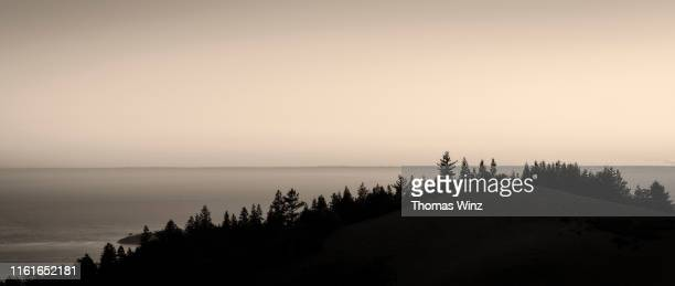 silhouetted trees trees and pacific ocean at sunset - in a row stock pictures, royalty-free photos & images