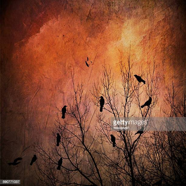 Silhouettes of birds in bare tree, textured effect