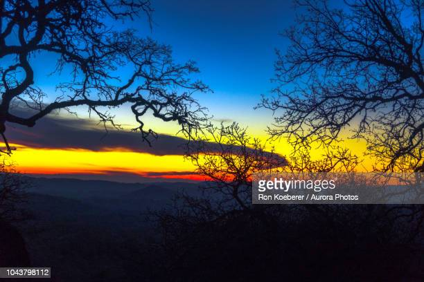 silhouettes of branches against sky at sunset in henry w. coe state park - koeberer stock photos and pictures