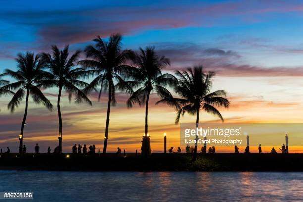 Silhouettes of Coconut Palm Tree at the Beach in Kota Kinabalu, Malaysia.