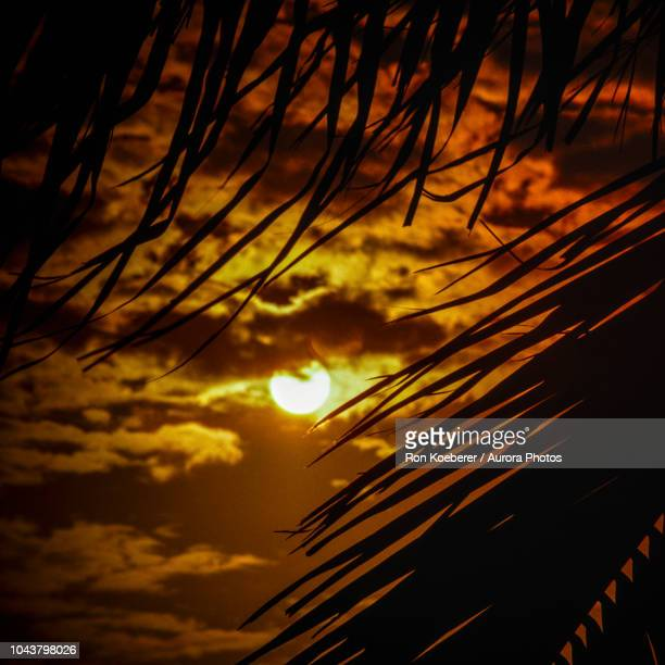 silhouettes of palm leaves against sky at dusk - koeberer stock photos and pictures