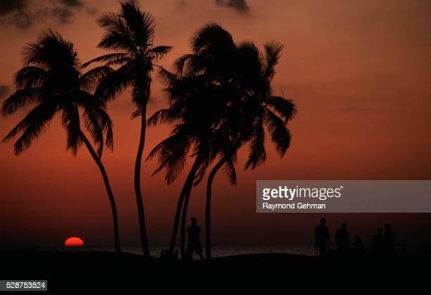 silhouettes of palm trees and people - captiva island - fotografias e filmes do acervo