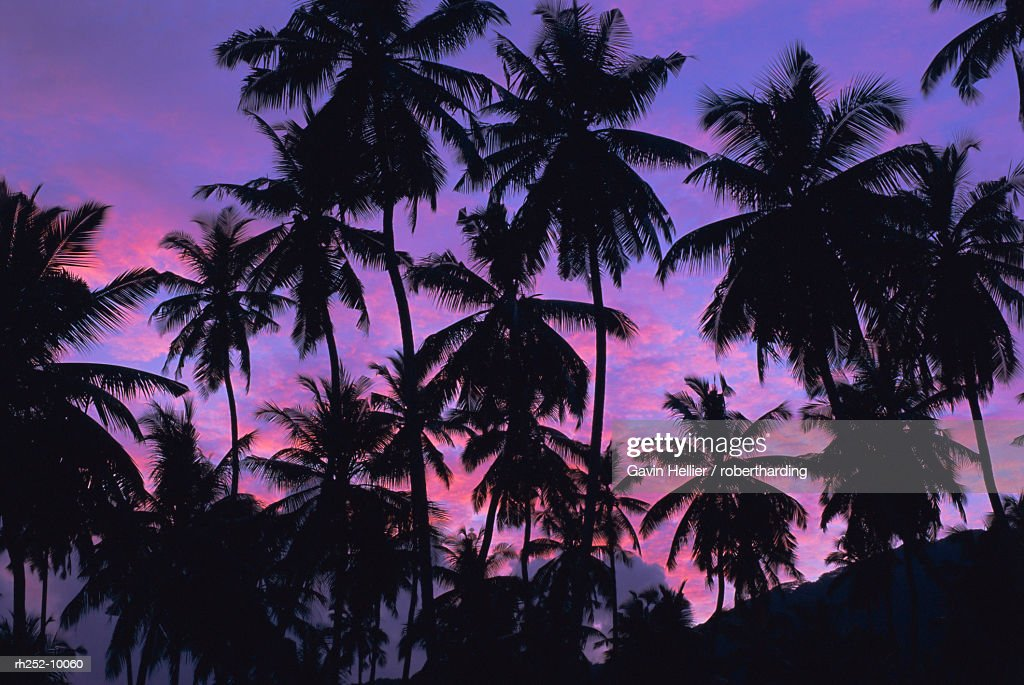 Silhouettes of palm trees, Mahe Island, Seychelles, Indian Ocean, Africa : Foto de stock