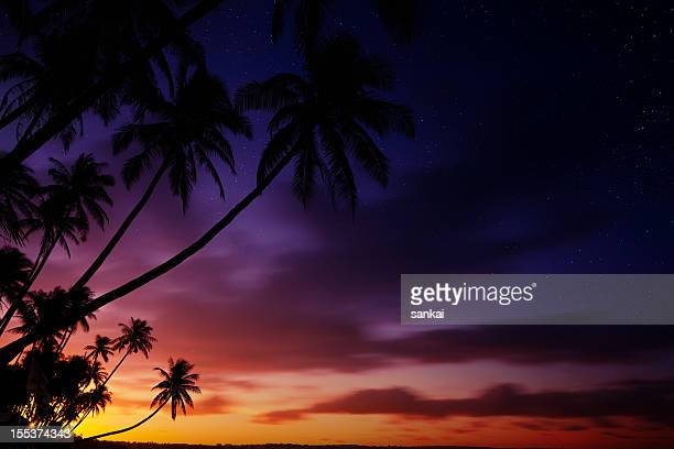 Silhouettes of palm trees on sunset
