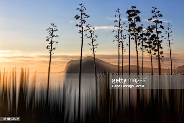 silhouettes of plants and trees growing along shore of cabo de gata-nijar natural park at dusk, murcia, spain - murcia - fotografias e filmes do acervo
