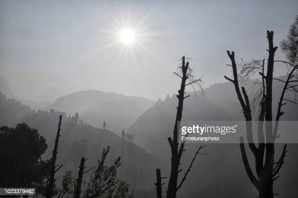 silhouettes of tree trunks at mount spil on a foggy day. - emreturanphoto fotografías e imágenes de stock