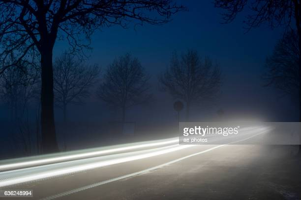 Silhouettes of trees and vehicle light trails at dawn