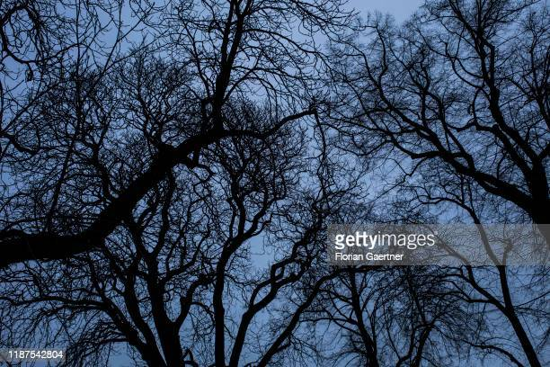 Silhouettes of trees are pictured during blue hour on December 08 2019 in Brandenburg Germany