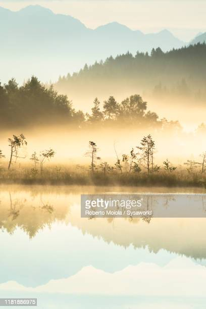 silhouettes of trees at sunrise, pian di gembro, aprica, italy - marsh stock pictures, royalty-free photos & images