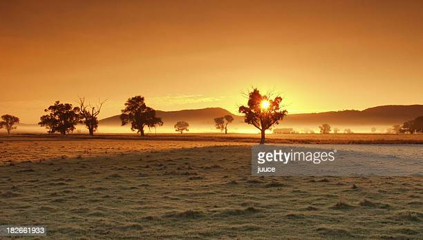 Silhouettes of trees over a golden sunset