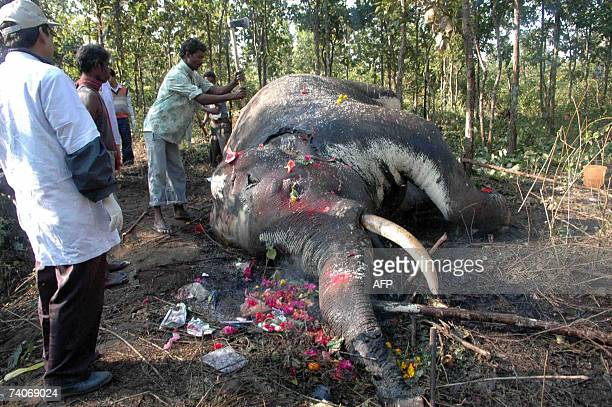 Internet-CITES-wildlife In this 24 December 2006 file photo, Indian forest officials examine the body of a wild elephant found dead in the Salugara...