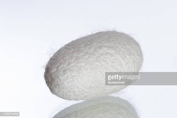 silk coocoon - cocoon stock pictures, royalty-free photos & images