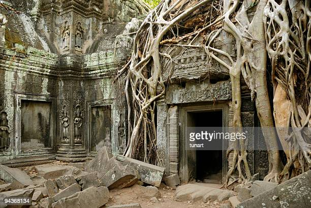 Silk Cotton Tree roots on Ta Prohm Temple, Angkor, Cambodia