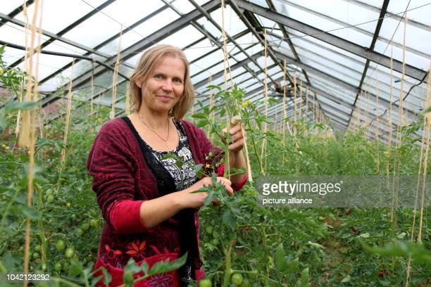 Silke Lucht standing in their greenhouse with tomatoes at Guidohof in Uhlsdorf, Germany, 13 July 2016. The couple created one of 20 demeter farms in...