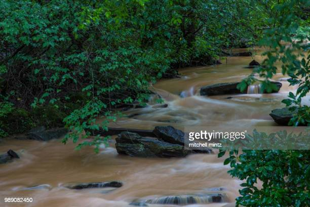 silky smooth flood - brook mitchell stock pictures, royalty-free photos & images