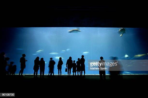 sillouhettes of people - aquarium stock pictures, royalty-free photos & images