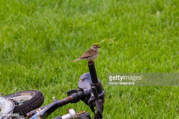 silly bird, bikes are for people - conor stock pictures, royalty-free photos & images