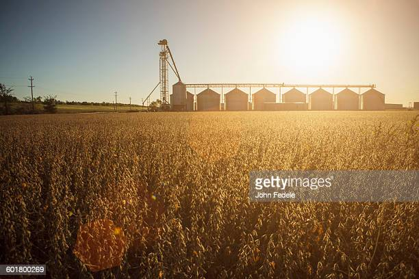 Silos and crops in farm field