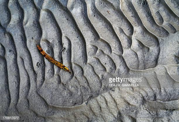 Silt deposited by the Brenton River Belluno Dolomites National Park Veneto Italy