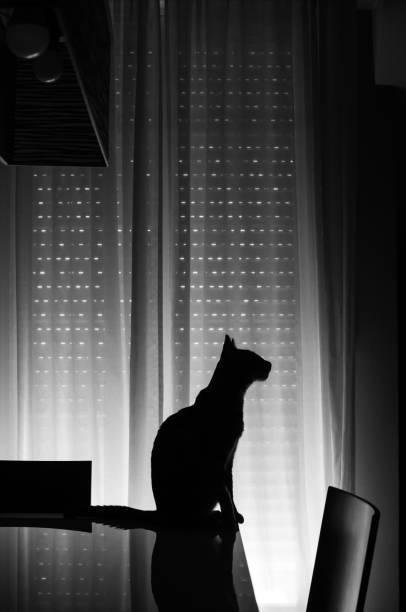 Silueta de gato de perfil a contraluz