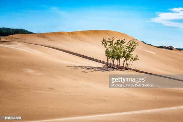 silver lake sand dunes in mears, michigan - michigan stock-fotos und bilder