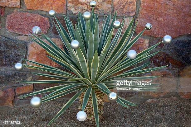 silver ornaments on spikes of agave plant - timothy hearsum stock photos and pictures