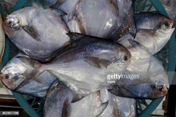 Silver Pomfrets in the Seafood Market