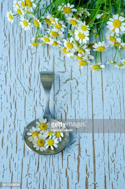 silver spoon with chamomile flowers - chamomile tea stock photos and pictures