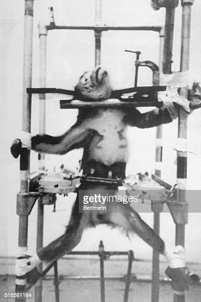 Police seized documents samples and 17 monkeys they claimed were mistreated at a medical research center during research to help human stroke victims...
