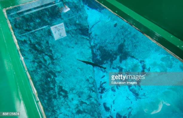 Silver Springs Florida one of oldest tourist attractions with glass bottom boat looking underwater and springs lakes animals and relaxing place for...