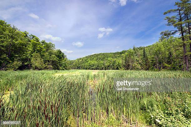 silvercreek marshlands in summer - escarpment stock pictures, royalty-free photos & images