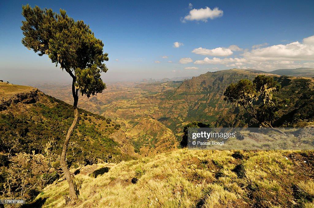 Simien National Park : Stock Photo