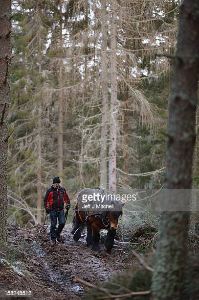Simon Lenihan, a full time commercial horse logger, removes a Scots Pine tree from the Balmoral Estate with Sultan De Le Campagne, a 15 year old...