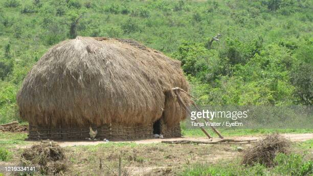 simple hut with thatched roof in africa - nairobi stock pictures, royalty-free photos & images