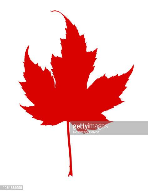 simple maple leaf shape in red, on white background. - traditionally canadian stock pictures, royalty-free photos & images