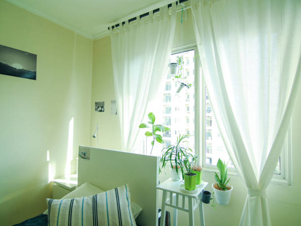 Simple Single Bedroom Interior Design Decorated with Houseplants