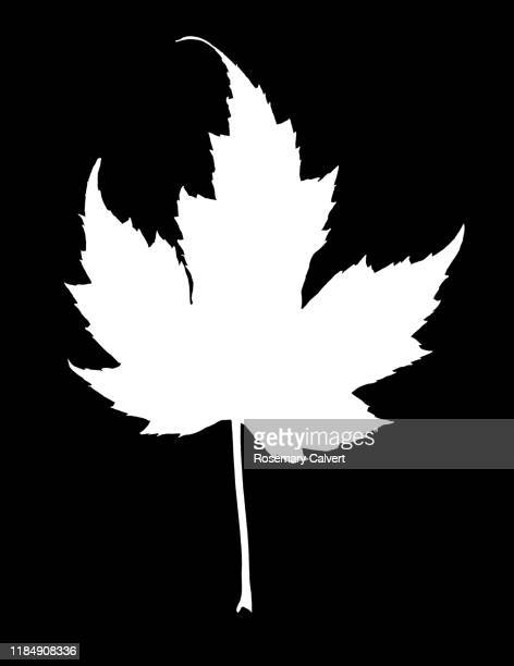 simple white maple leaf shape on black. - digital enhancement stock pictures, royalty-free photos & images