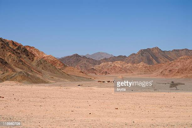 Sinai Desert with Bedouin settlement, Nabq National Park,Egypt