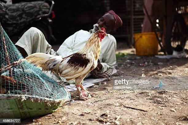 sindh hahn verkäufer im asiatischen haustier-markt - pakistan stock-fotos und bilder